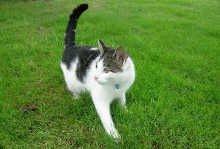 Il linguaggio del corpo for La coda del gatto