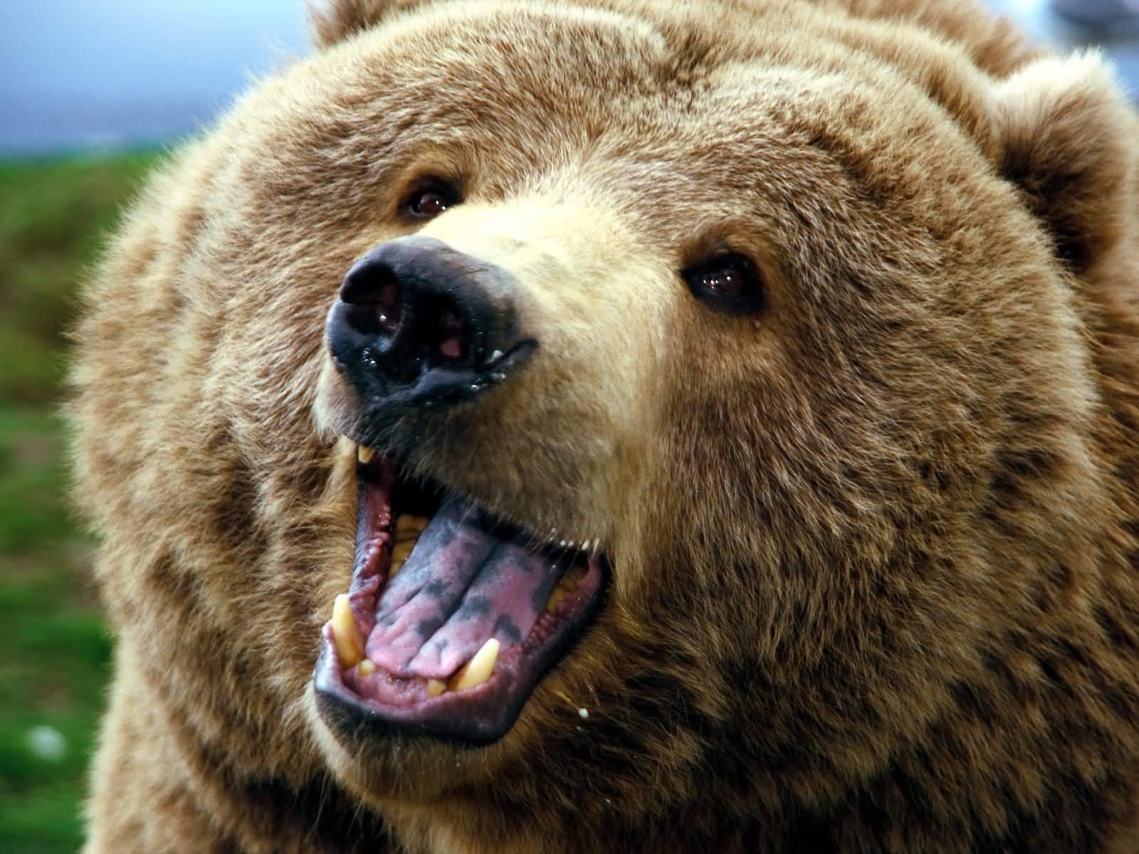 L 39 orso for Affittare una cabina nel grande orso